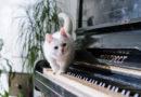 Jaunie pianisti spēlē džeza un populāro mūziku
